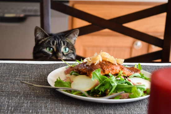 black cat sitting on kitchen chair sniffing seared salmon salad